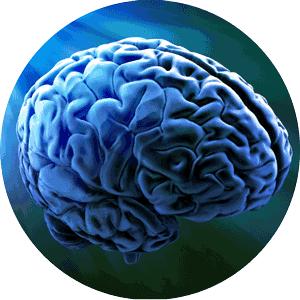 cerebro-redondo-300x300
