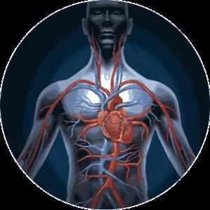 circulatorio-redondo-300x300