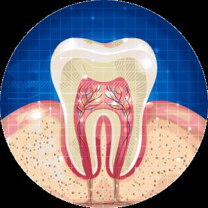 kinesiología del sistema dental