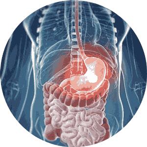 digestivo-redondo-300x3001