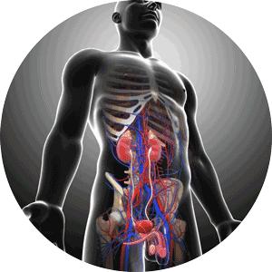 mtc sistema urinario