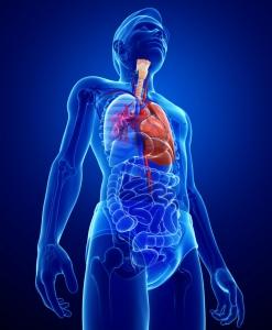 Difteria en algunos puntos del aparato respiratorio