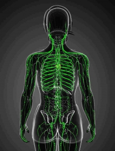 Sistema Hemolinfático