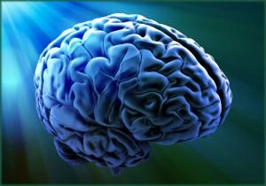 formatos del cerebro